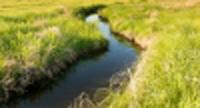 Stream of water flows through grassy field.